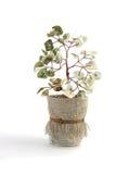 Albero dei bonsai isolato su bianco Immagini Stock Libere da Diritti