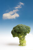 Albero dei broccoli Fotografie Stock