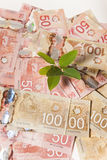 Albero dei fondi del Canada Fotografia Stock