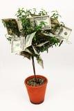 Albero dei soldi Fotografia Stock Libera da Diritti