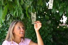 Albero dei soldi Immagini Stock