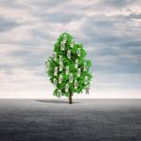 Albero dei soldi all'aperto Fotografia Stock Libera da Diritti