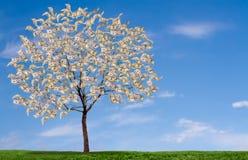 Albero dei soldi su cielo blu e campo erboso Fotografie Stock