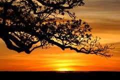 Albero del baobab, Kimberly, Australia Fotografia Stock Libera da Diritti