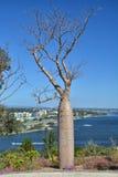 Albero del baobab in re Park immagini stock