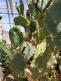 Albero del cactus immagini stock libere da diritti
