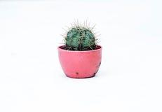 Albero del cactus Fotografie Stock