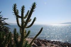 Albero del cactus su una riva della spiaggia Immagine Stock Libera da Diritti