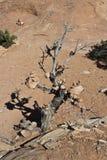 Albero del cairn Fotografia Stock Libera da Diritti