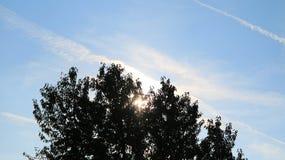 Albero del cielo Fotografie Stock
