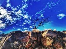 Albero del cielo Fotografie Stock Libere da Diritti
