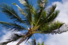 albero del cielo della palma Fotografie Stock