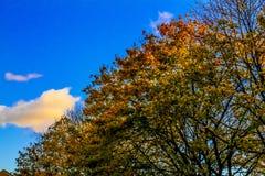 Albero del cielo di autunno Immagini Stock Libere da Diritti