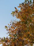 Albero del cielo di autunno fotografie stock libere da diritti