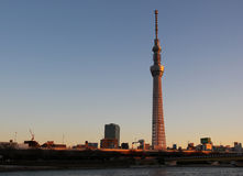 Albero del cielo di Tokyo Fotografie Stock