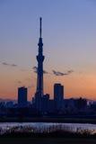 Albero del cielo di Tokyo al crepuscolo Immagini Stock Libere da Diritti