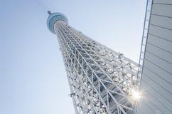 Albero del cielo di Tokyo, Giappone fotografia stock libera da diritti