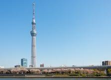 Albero del cielo di Toyko immagini stock