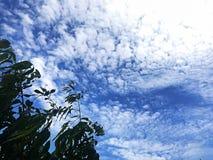 albero del cielo di verde blu Fotografie Stock Libere da Diritti