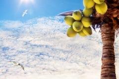 Albero del cocco Fotografie Stock Libere da Diritti