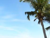 Albero del cocco alla montagna del bastoncino della spiaggia o il KaoTao o il KaoTakiap in Hua Hin, Tailandia Fotografia Stock