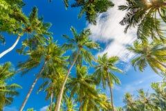 Albero del cocco con cielo blu, bello fondo tropicale fotografia stock libera da diritti