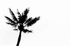 Albero del cocco della siluetta su fondo bianco Fotografia Stock