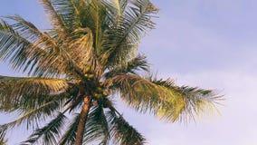 Albero del cocco su cielo blu Fondo tropicale dell'isola di paradiso thailand 4K archivi video