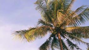 Albero del cocco su cielo blu Fondo tropicale dell'isola di paradiso thailand 4K video d archivio