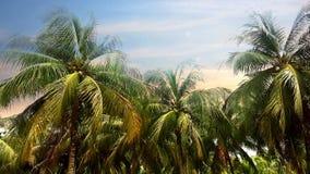 Albero del cocco sui precedenti del cielo a tempo crepuscolare Fotografia Stock
