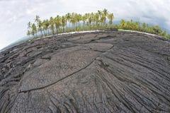 Albero del cocco sulla riva nera hawaiana della lava Fotografia Stock