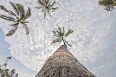 Albero del cocco sulla spiaggia di sabbia bianca tropicale Immagini Stock