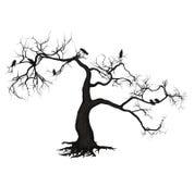 Albero del corvo Immagini Stock