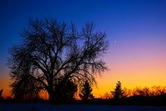 Albero del Cottonwood & luna della mezzaluna al tramonto Fotografia Stock