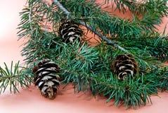 Albero del decorazione-pino di natale Fotografie Stock