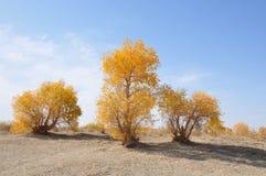 Albero del deserto fotografia stock