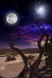 Albero del deserto Fotografie Stock