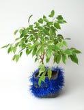 Albero del Ficus Fotografia Stock