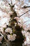 Albero del fiore Fotografie Stock