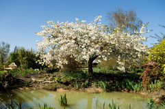 Albero del fiore dal lago Fotografie Stock