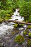Albero del fiume immagini stock