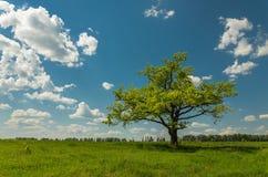 Albero del fnd del campo prima di cielo blu con le nuvole Fotografie Stock Libere da Diritti