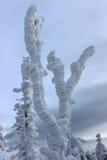 Albero del gelo Immagine Stock