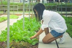 Albero del germoglio della tenuta della mano della donna di vista laterale per preparare pianta un albero su terra al giardino al Immagine Stock