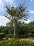 Albero del giardino Fotografia Stock