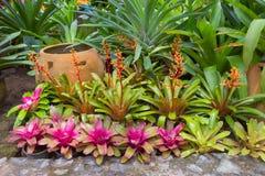 Albero del giardino (pianta dell'urna) fotografie stock