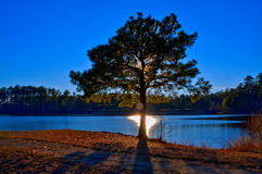 Albero del lago Fotografia Stock