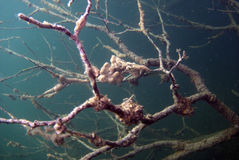 albero del neurone Fotografie Stock Libere da Diritti