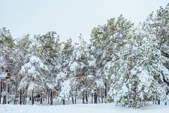 Albero del nuovo anno paesaggio di inverno della foresta di inverno nel bello con gli alberi innevati Alberi coperti di hoarfrost Immagini Stock