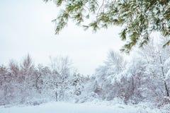 Albero del nuovo anno paesaggio di inverno della foresta di inverno nel bello con gli alberi innevati Alberi coperti di hoarfrost Fotografia Stock
